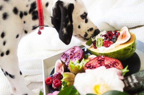 alimentation maison chien