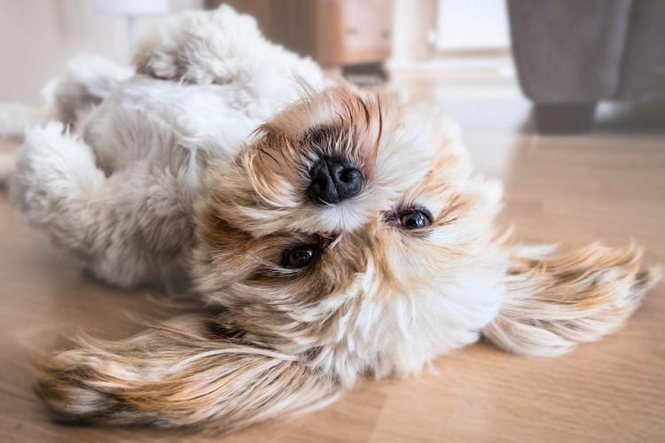comportement du chien avec son maitre
