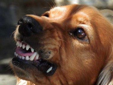 chien qui grogne