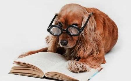 testez l'intelligence de votre chien