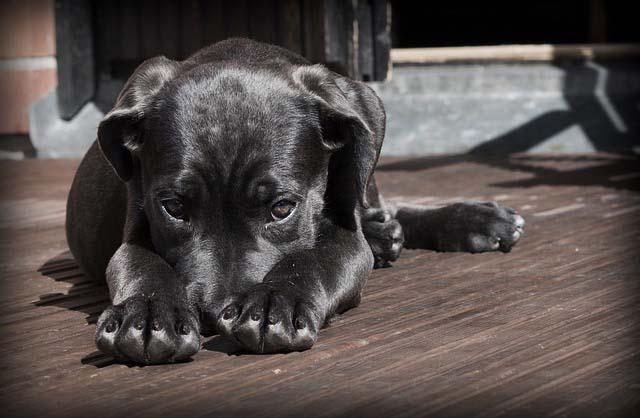 éducation canine