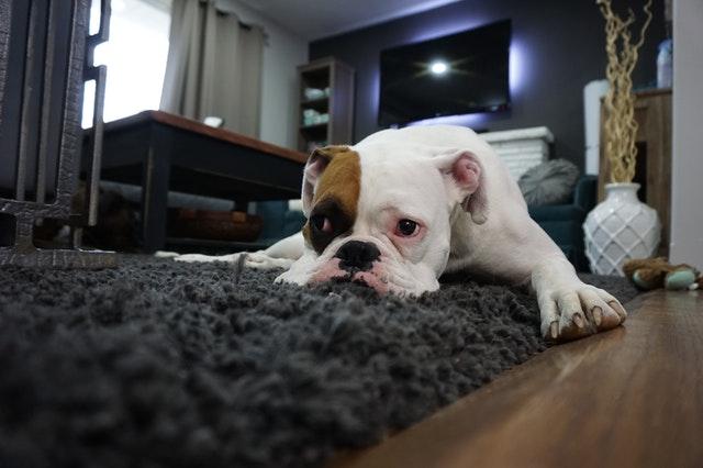 chien propre le jour mais pas la nuit
