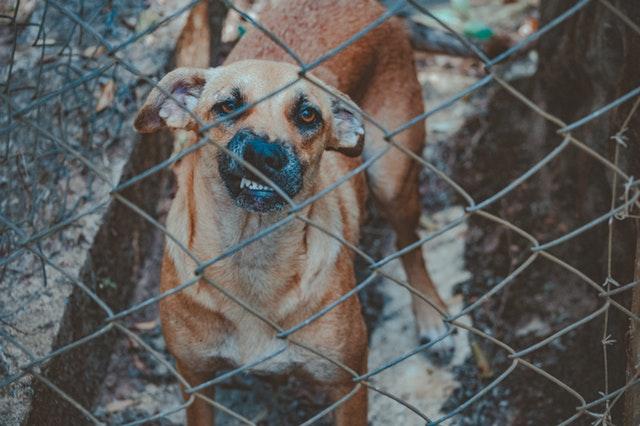 chien agressif avec les autres chiens