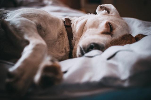 comportement chien malade