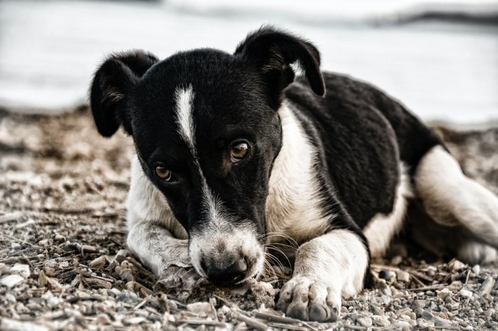 chien agressif par peur