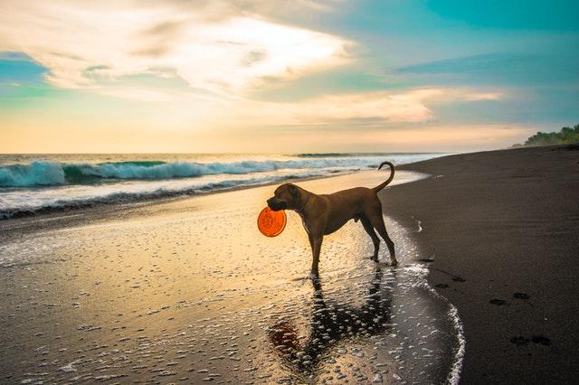 idée de jeu avec votre chien