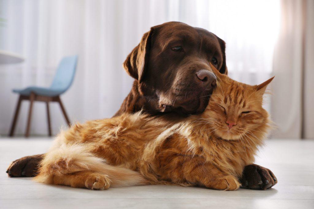 pourquoi mon chien aime le chat de la maison mais pas les autres